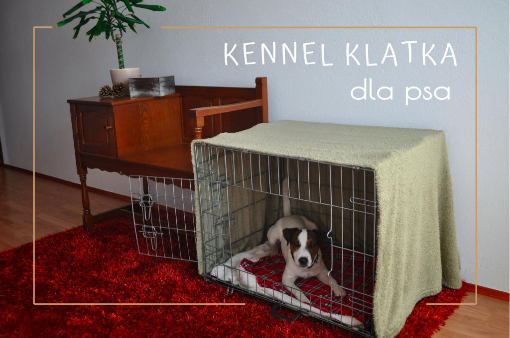 Jak-uspokoic-psa-w-sylwestra-Kennel-klatka-dla-psa