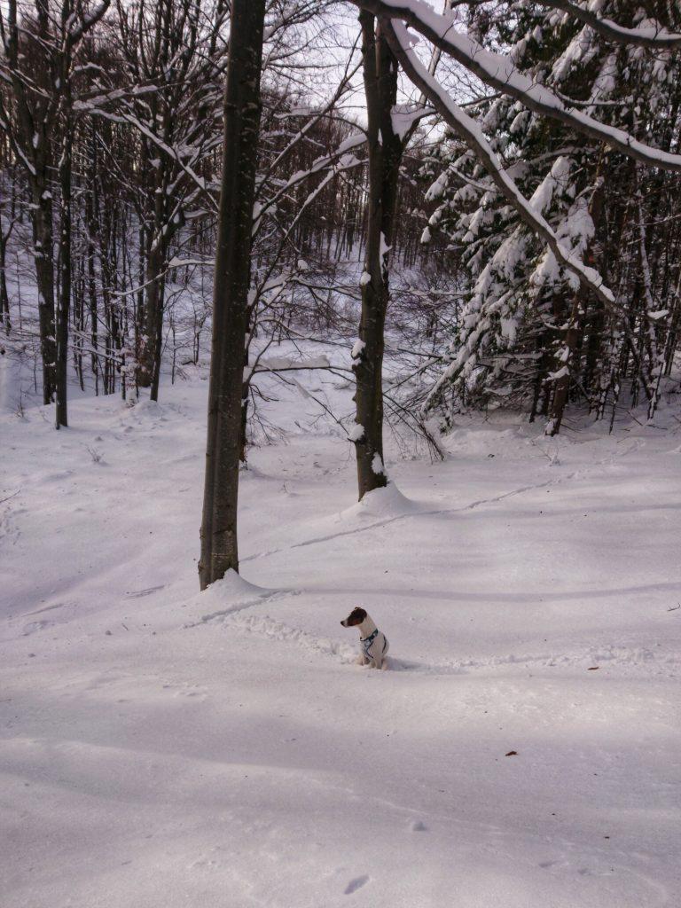 Pies-dwernik-kamien-bieszczady-z-psem